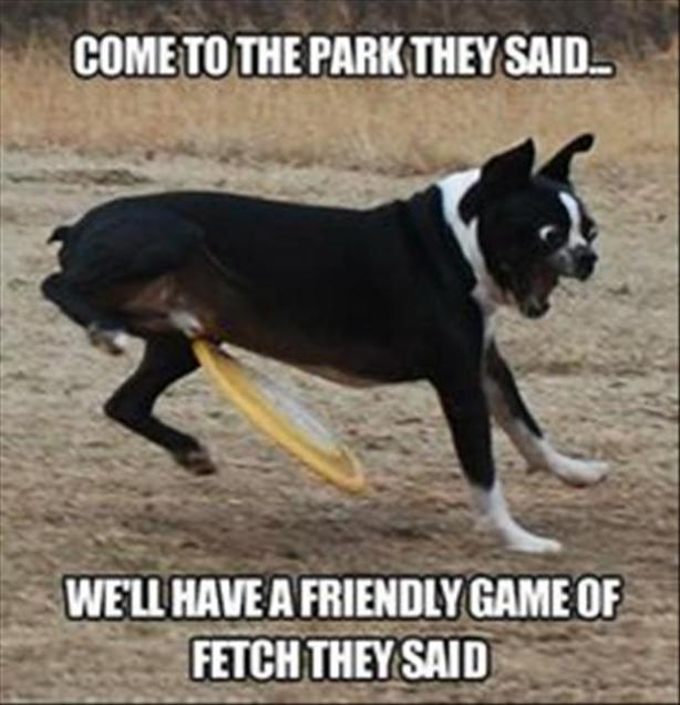 14playing catch with your dog