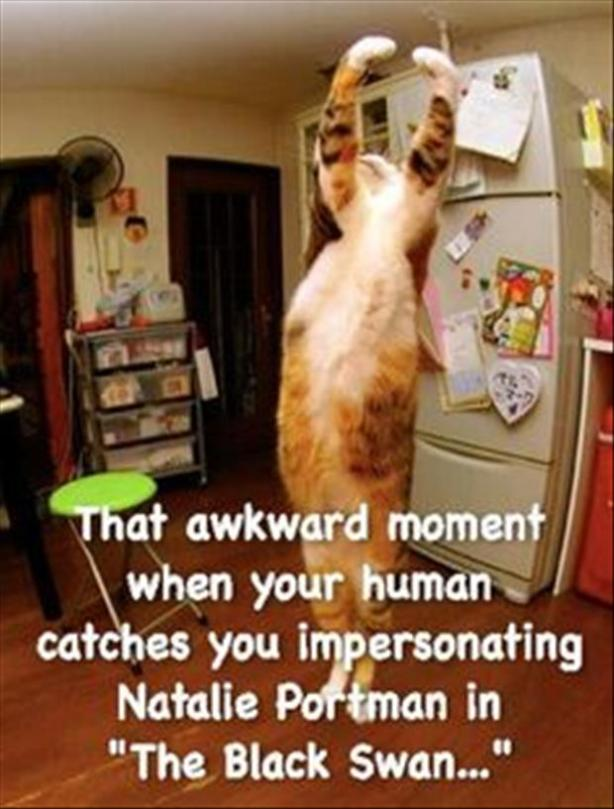 16the awkward moment for cats