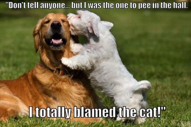 2dog secrets