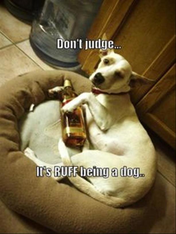3drinking dog