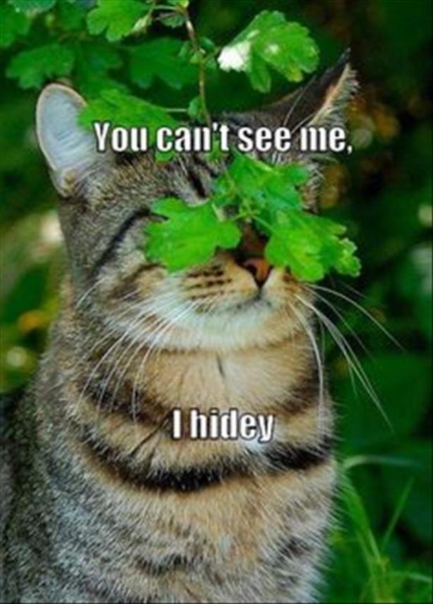 7hiding cat