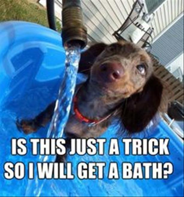 9how to give a dog a bath