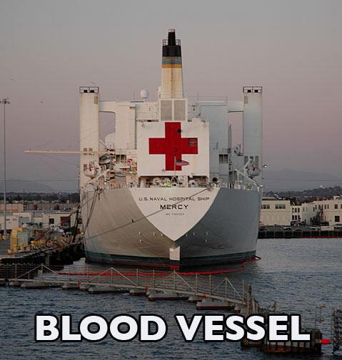 blood-vessel-1