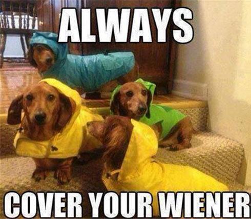 funny-dogs-wiener-cover-rain-1