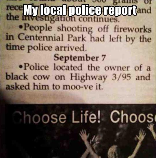 funny-police-report-cow-highway-1