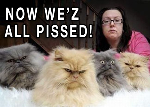 12 Pissed-Cats