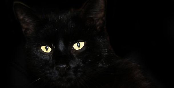 balckcat