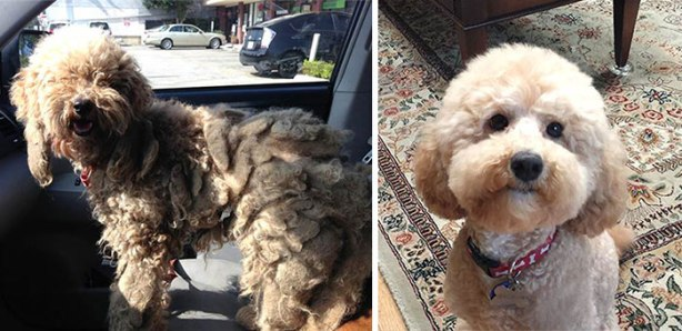 dog-makeover-before-after-rescue-11