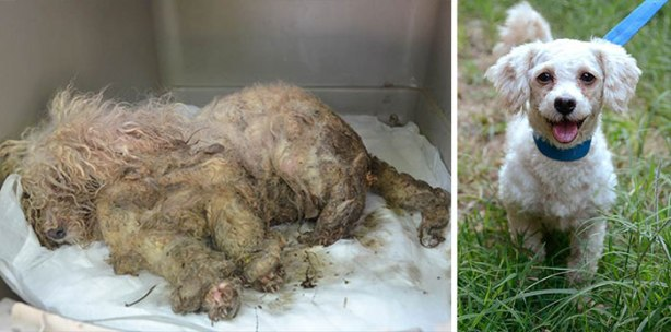 dog-makeover-before-after-rescue-151