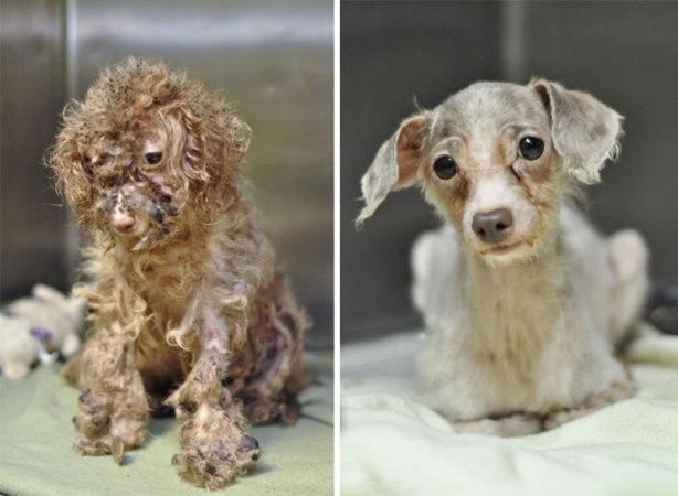 dog-makeover-before-after-rescue-181