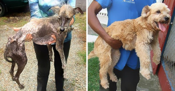 dog-makeover-before-after-rescue-191