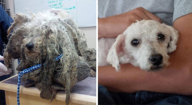 dog-makeover-before-after-rescue-301