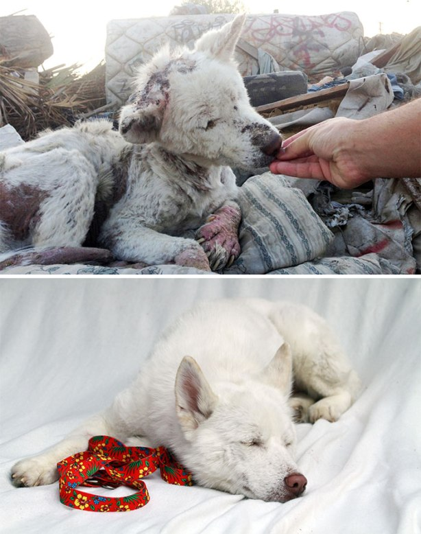 dog-makeover-before-after-rescue-321