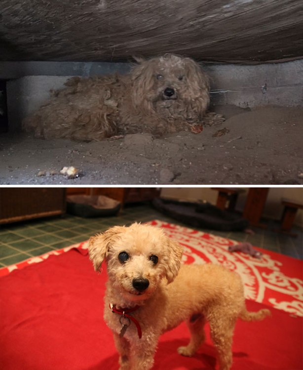dog-makeover-before-after-rescue-391