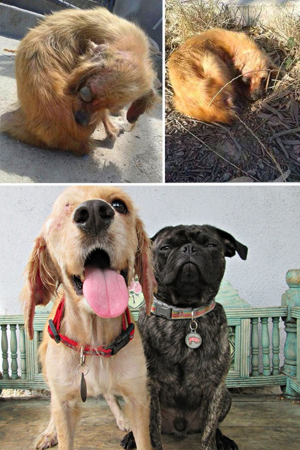 dog-makeover-before-after-rescue-401