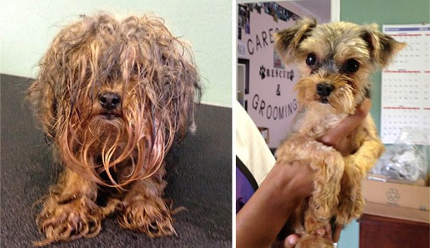 dog-makeover-before-after-rescue-41