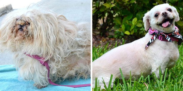 dog-makeover-before-after-rescue-71