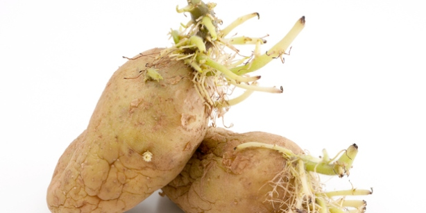 Potato found growing inside woman after being used as a contraceptive