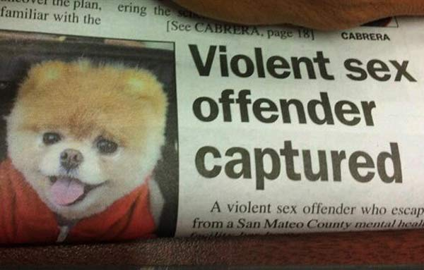sex-offender-newspaper-fails