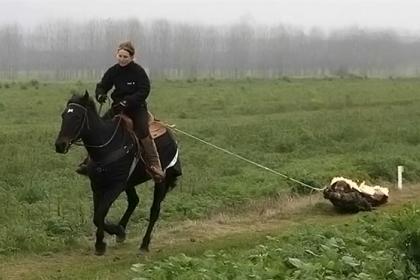 11 horsepullrecord