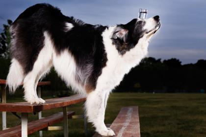 9 dogwaterrecord