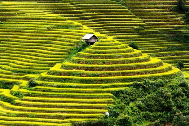 www.amazingplacesonearth.com-Mu-Cang-Chai-Vietnam-RICE-